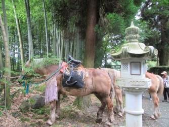飾り馬も出番を待っています ばんえい競馬に出ていた馬だとカメラマンに教えてもらいました