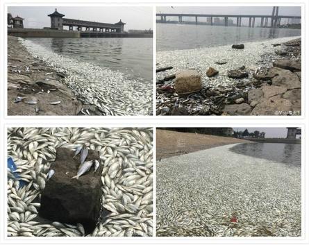 爆発現場から5キロ離れた河川で魚大量死