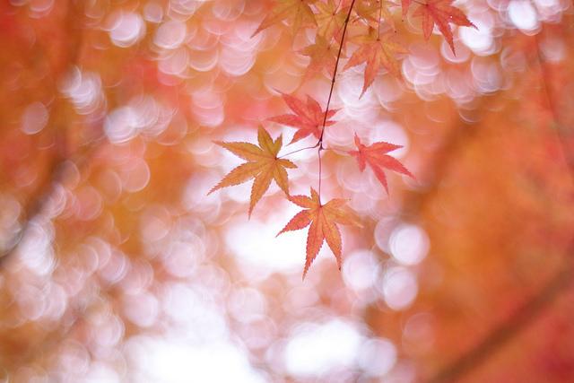 KENTAMA/Flickr