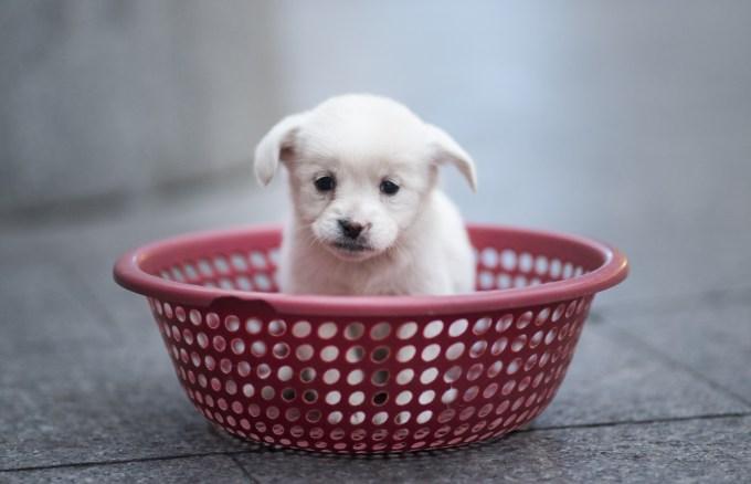 プラスチック製のカゴに入れられ、売られる子犬。上海の地下鉄駅周辺で28日撮影。販売主によると、一匹あたり100元。この日は4匹売りだされた (JOHANNES EISELE/AFP/Getty Images)