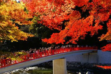 愛知県香嵐渓の紅葉(豊田市観光協会)
