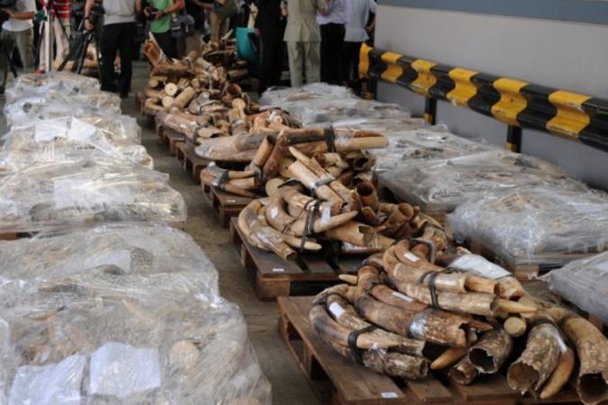 タンザニアは違法取引象牙の世界最大の供給元であり、中国は密猟象牙の最大輸入国と指摘されている (AFP PHOTO / Dale de la Rey)