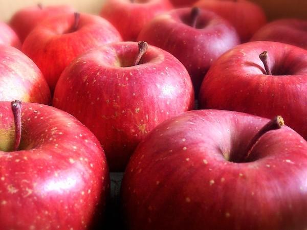 リンゴ(写真AC)
