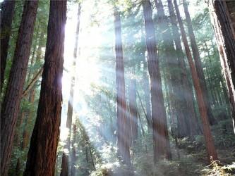 カナダ・ブリティッシュコロンビア大学(UBC)森林科学教授のスザンヌ・シマール(Suzanne Simard)氏は木と木の間でつながっている根部を通じて、情報と栄養素を交換すると話した。(pixabay)