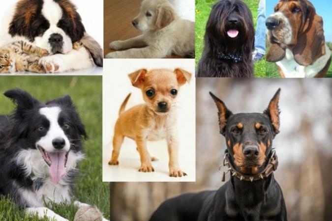 あなたが飼っている犬種は?(Wikimedia Commons)