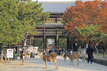 野生の鹿が多く生息する日本の古都奈良(Getty Images)