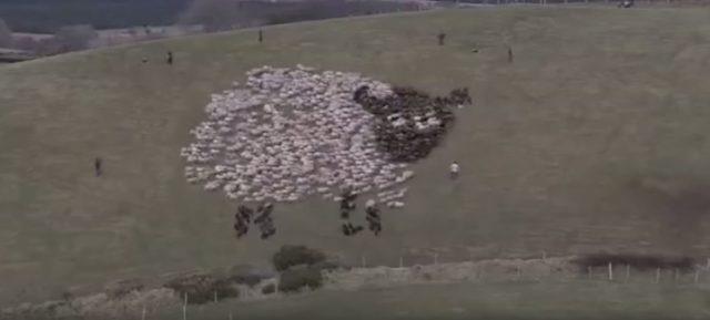 羊のアート(動画のスクリーンショット/大紀元)