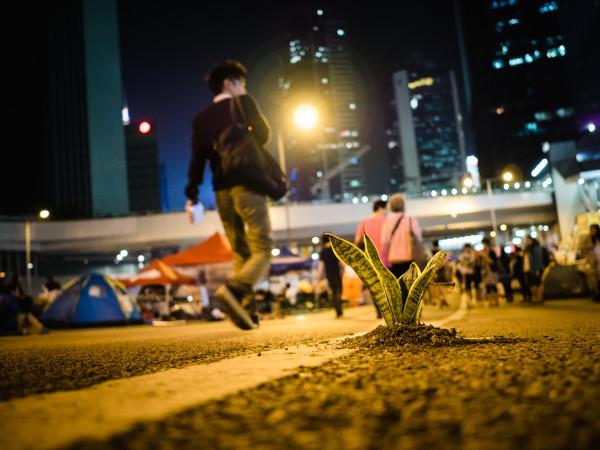 2014年、香港民主運動「黄傘革命」で、活動の支持者が民主の芽が生えていることを表現(Studio Incendo/flickr)