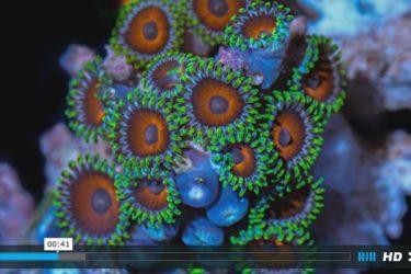 スペインの映像制作会社myLapseがタイムラプスで制作したサンゴの動画(スクリーンショット)