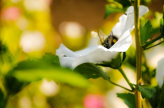 蜂のおどろくべき知能の高さ(Adam Świątkowski/Flickr)