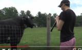 クリーブランド・オーケストラのメンバーがオーボエを吹いている時に黒い牛が寄ってきた(YouTubeよりスクリーンショット)