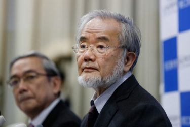 今年のノーベル医学・生理学賞を受賞した東京工業大学栄誉教授の大隈良典さん。(Ken Ishii/Getty Images)