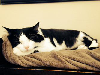 ルイジアナ州でこのたび、車庫のシャッターに猫が挟まったまま放置されているという珍事がニュースになった。さいわい、猫は救出され、ほとんど無傷だったという。写真は参考写真、記事中の猫とは関係なし(Shannon McGee/flickr)