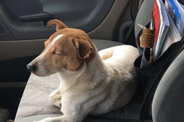 勇敢な犬(Humane Society of Summit County)
