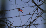 北京の北朝鮮大使館に掲げられた国旗。(FRED DUFOUR/AFP/Getty Images)