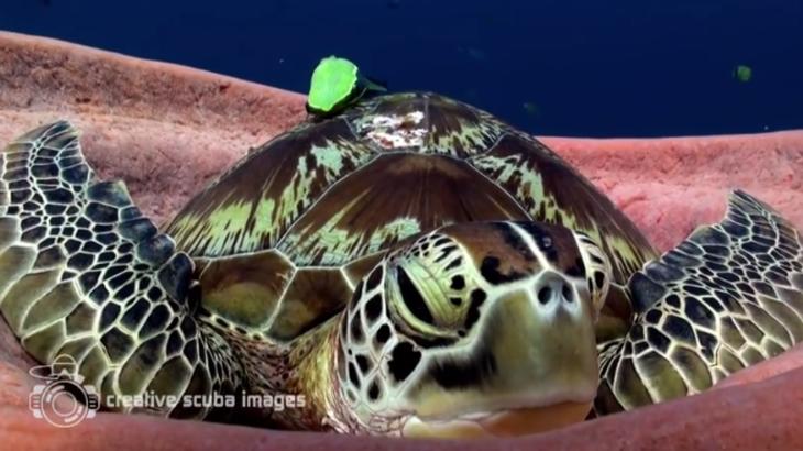 決定的瞬間、あくびする亀を撮影(Creative Scuba Images動画スクリーンショット)