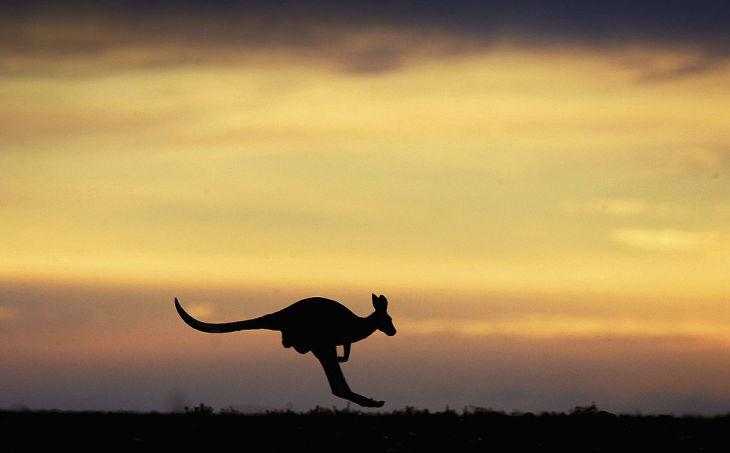 オーストラリアでは中国人留学生が急増している。専門家は、留学人の受け入れを収入源とすることに警鐘を鳴らす(Ian Waldie/Getty Images)