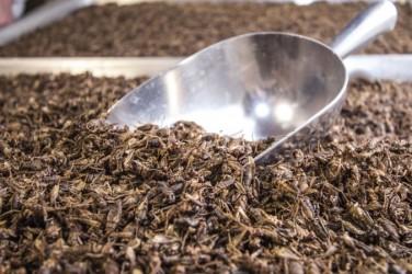 カナダのオンタリオに本拠を置くEntomoファームの同社の共同設立者、ジャロッド・ゴールドイン氏は、コオロギ粉末をたんぱく質源とした栄養食品の「ビジネスは活況を呈している」と述べた(EXO社)
