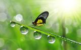 福の多い人生を送るには、まず徳を積むこと(Fotolia)