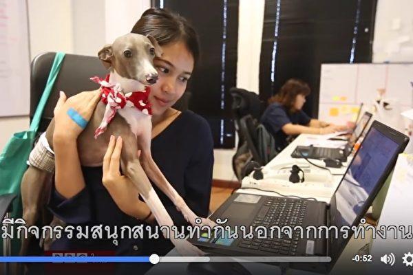 仕事に行き詰まったら、犬を抱きしめる。癒されて効率アップ(スクリーンショット)