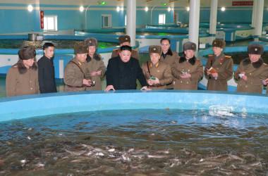 2017年2月、北朝鮮南西部・黄海南道(ファンヘナムドウ)にあるナマズ養殖場を視察する金正恩・朝鮮労働党委員長。朝鮮中央通信が公開した(STR/AFP/Getty Images)
