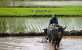 ベトナムでも都市部と農村の格差が大きな問題となっている。写真は水田を耕すベトナムの農民(Photo credit should read HOANG DINH NAM/AFP/Getty Images)