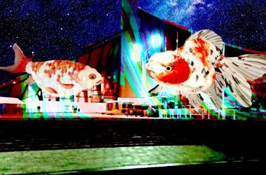 「空飛ぶ金魚プロジェクト」は、地域の様々な文化の発展を目指し日本各地で展開をしており、今回は京都嵐山に続く2回めの公開となっている(一般社団法人日本デジタル芸術スポーツ文化創造機構)