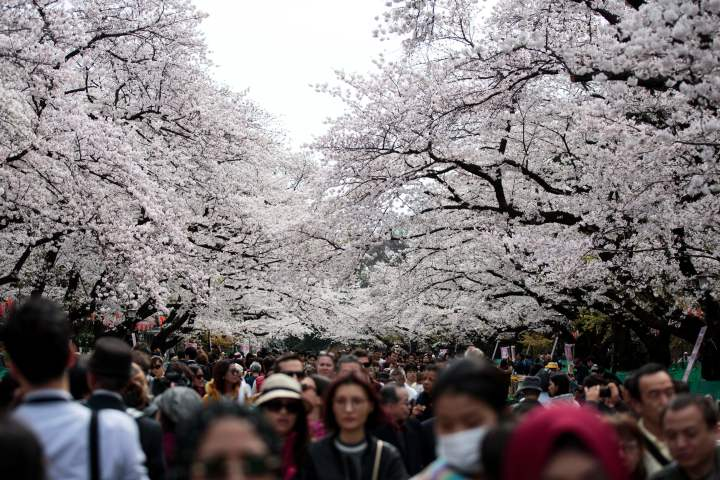 都内の公園で花見する市民ら。写真は2017年4月に撮影されたもの。(BEHROUZ MEHRI/AFP/Getty Images)