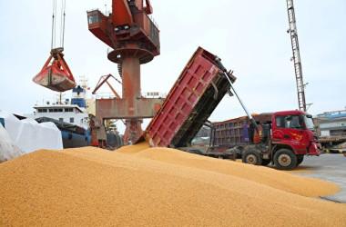 米中貿易摩擦が高まるなか、アルゼンチンがこのほど米国産大豆を大量に買い付けたと報じられている。写真は、江蘇省南通市の港で置かれている輸入大豆(AFP/Getty Images)