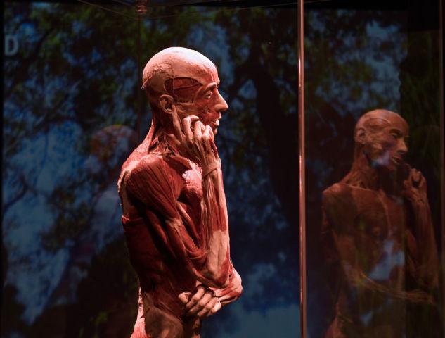2017年11月、イタリアのセビリア市で開催された人体標本展「ボディ・ワールド」の展示作品(CRISTINA QUICLER/AFP/Getty Images)