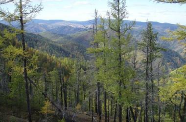 シベリアの森林、参考写真(Elkwiki/Wikipedia Commons)