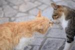 鞆の浦の猫(蘭三郎撮影)