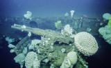 65年前に沈んだ空母「インディペンデンス」発見される(Ocean Explornation Trust)
