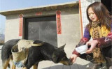 犬は村の人気者になっている(ネット写真)