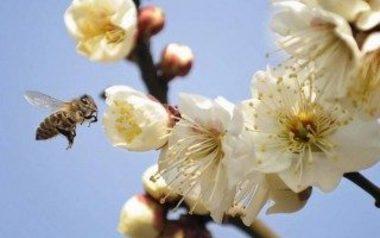 蜜を取っている蜂(Getty Images)