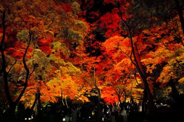 ライトアップされた月の石もみじ公園(野上浩史 撮影)