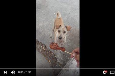 話題になった母犬の動画(スクリーンショット)