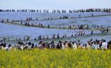 国立ひたち海浜公園では青国立ひたち海浜公園では青い花ネモフィラが見ごろを迎える。黄色い菜の花畑と美しいコントラスト(KAZUHIRO NOGI/AFP/Getty Images)い花ネモフィラが見ごろを迎える。黄色い菜の花畑と美しいコントラスト(KAZUHIRO NOGI/AFP/Getty Images)