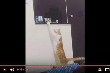 子猫のためにおもちゃを取ってあげた大人の猫。猫の間にも友情が存在する?(スクリーンショット)