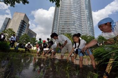 高層ビルに囲まれて田植え、子どもたちも楽しそうだ ( KAZUHIRO NOGI/AFP/Getty Images)