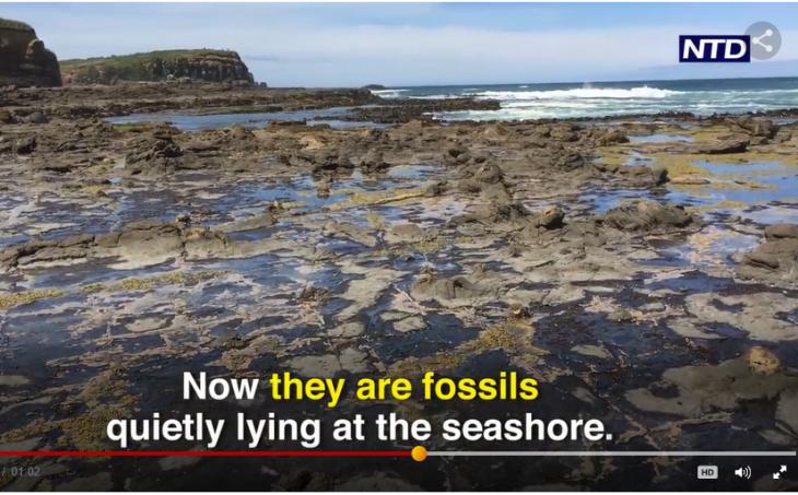 ニュージーランドの海辺に広がる森の化石(スクリーンショット)