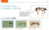 危険な外来昆虫ヒアリによる被害を防ぐために「ストップ・ザ・ヒアリ」一部スクリーンショット(環境省自然環境局)