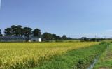 稲刈りをする水田(イメージ)