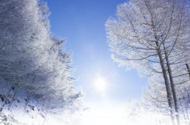 地球の表面は華やかさを失いますが、地球の胎内は冬眠生活の生命で満ち溢れています(AC PHOTO)