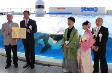 日本で初めて飼育下で繁殖し20歳を迎えたシャチ「ラビー」も鴨川市成人式に登場。新成人と共に成人証書授与式に参加した(鴨川シーワールド)