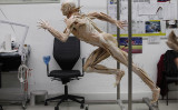 2016年、プラスティネーション開発10年記念展がドイツで開催され、準備される献体の人体標本 (Photo by Michele Tantussi/Getty Images)