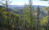 ロシア極東シベリア地方の針葉樹林(タイガ)(ウィキペディアより)