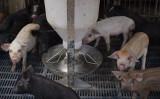 中国共産党政府は、炭疽(たんそ)菌の流行に関する全国的な警告を発表していない