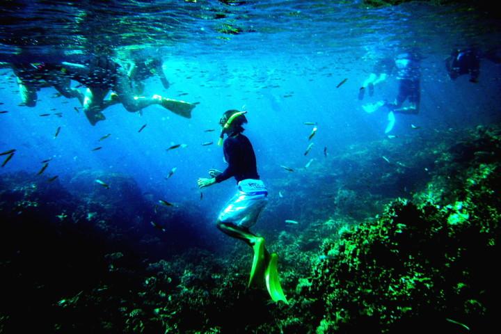 パラオで遊泳する観光客、参考写真(Albert)