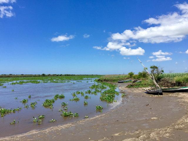 インド洋に面する東アフリカの国モザンビークの湿地帯、参考写真(Rosino)